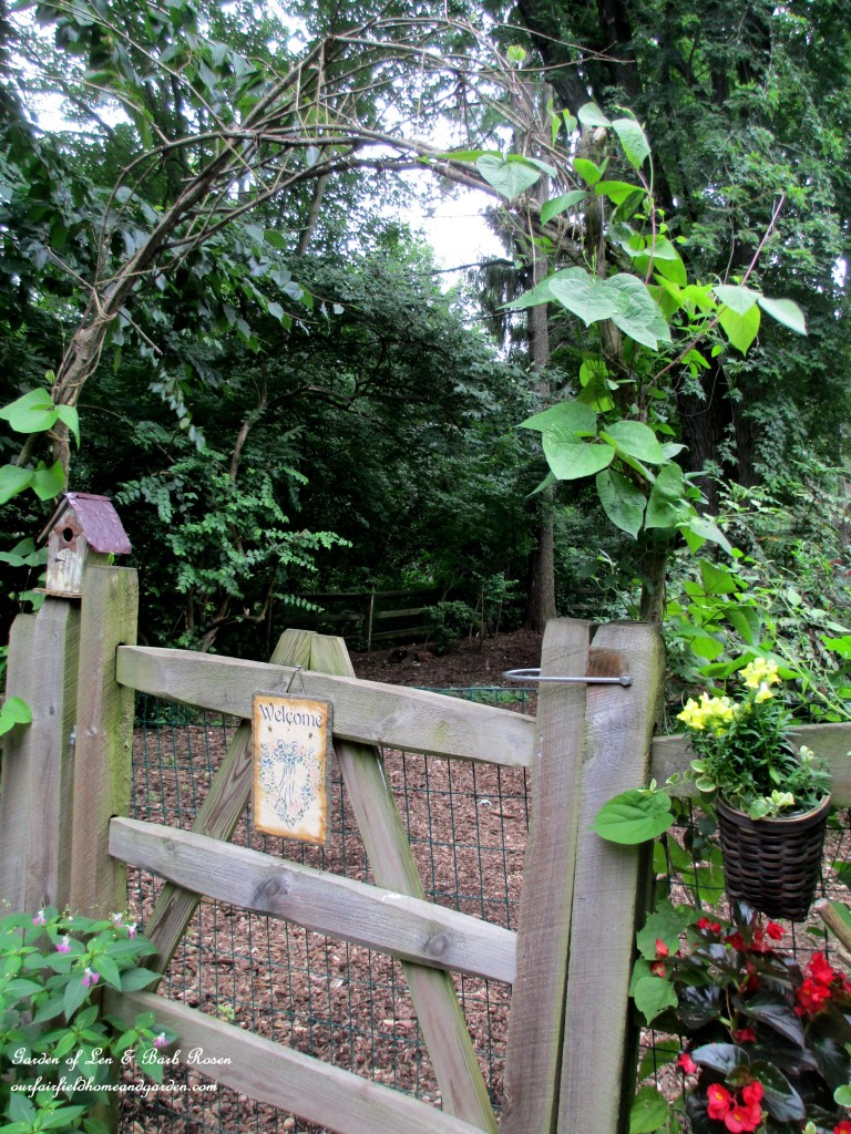 This year the Branch Arbor is planted with moonflower vine and purple hyacinth vine