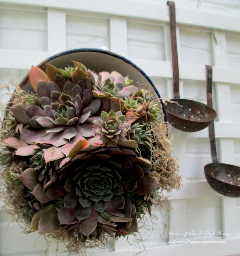 succulent planted in a vintage colander https://ourfairfieldhomeandgarden.com/our-summer-potting-sink/
