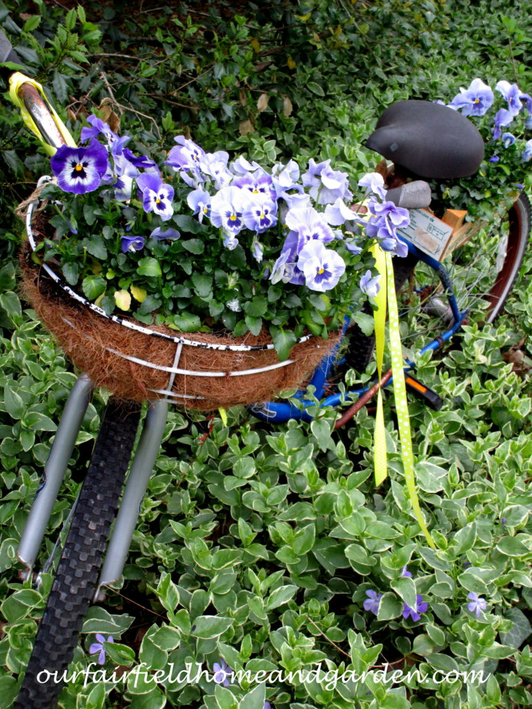 Bike Planter with Pansies http://ourfairfieldhomeandgarden.com/diy-project-my-bicycle-planter/