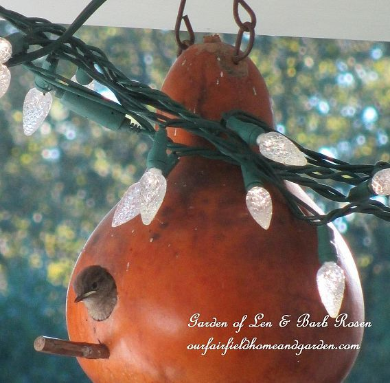 Birds In Our Garden ~ Our Fairfield Home and Garden
