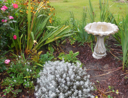 Cleaning a birdbath! ~ The Gardening Cook