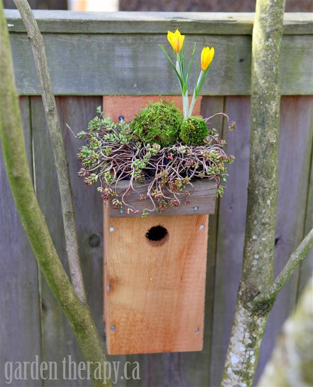 Green Roof Birdhouse ~ Garden Therapy