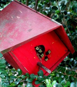 Bee Birdhouse! http://ourfairfieldhomeandgarden.com/its-all-about-the-birds-birdfeeders-birdbaths-and-birdhouses-in-our-garden/