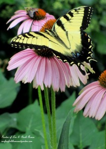 coneflower & pollinators https://ourfairfieldhomeandgarden.com/garden-walk-my-summer-garden/
