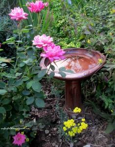blooms & birds in this garden!