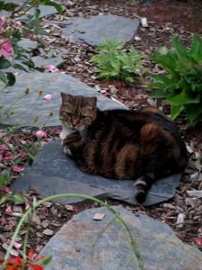 Tiger in her garden