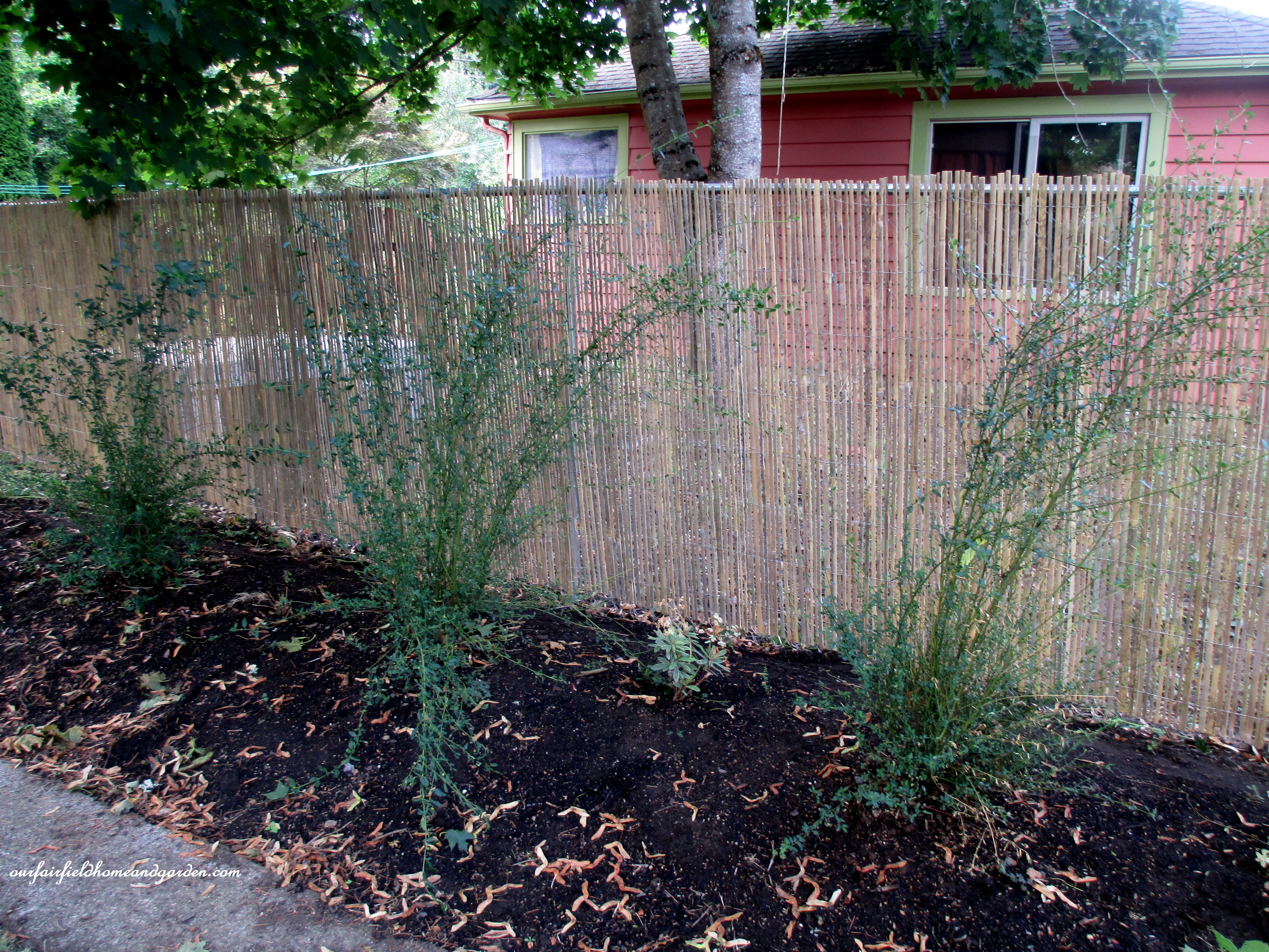 Diy Beautify A Chain Link Fence With Bamboo Our