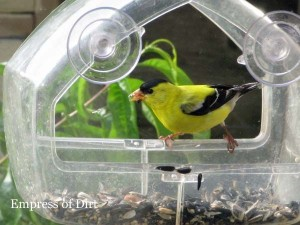 Window Bird Feeders ~ Empress of Dirt