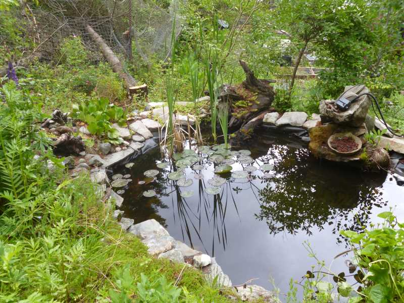 Drought Smart Plant's pond ecosystem
