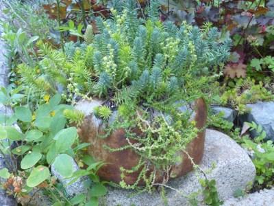 Rusty Kettle & Sedum at www.bluefoxfarm.com/junk-gardening.html