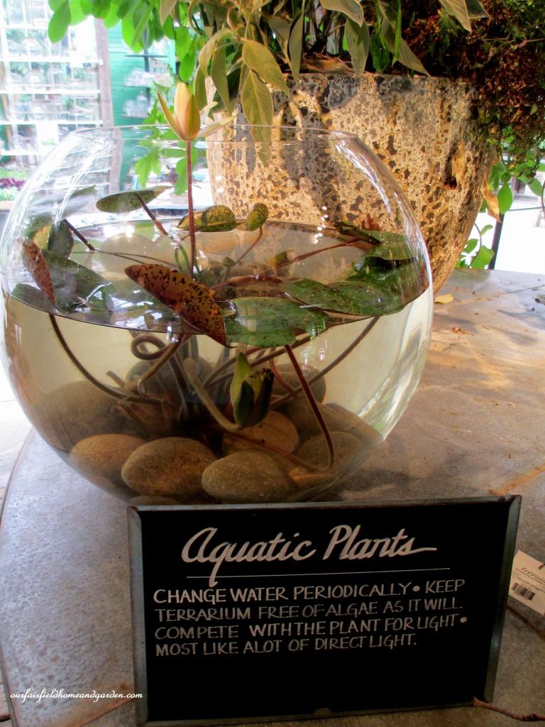 aquatic plant terrarium