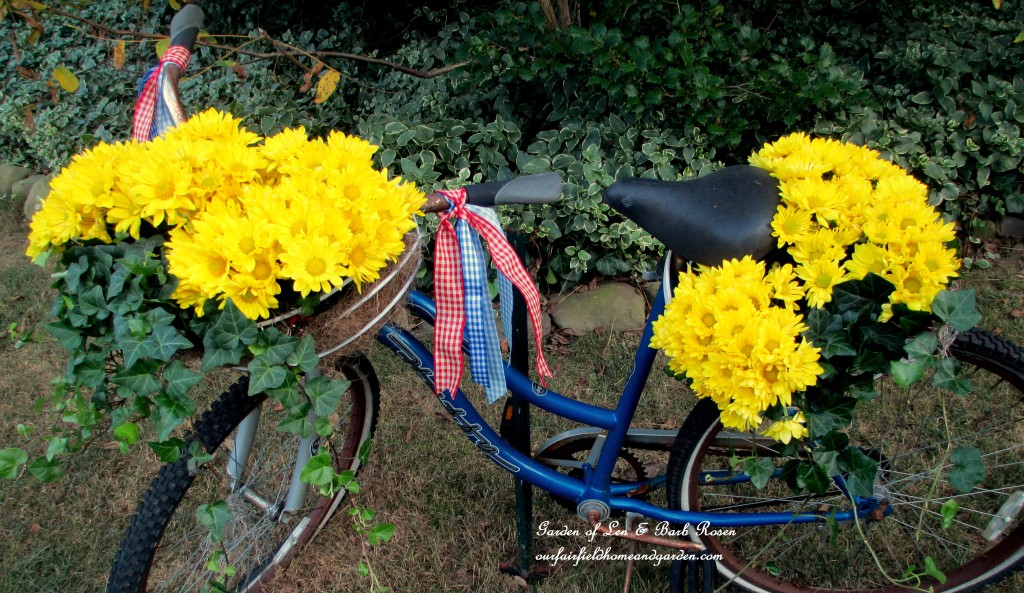 Garden Bike Planter filled with yellow mums and ivy! https://ourfairfieldhomeandgarden.com/fall-is-in-the-air/