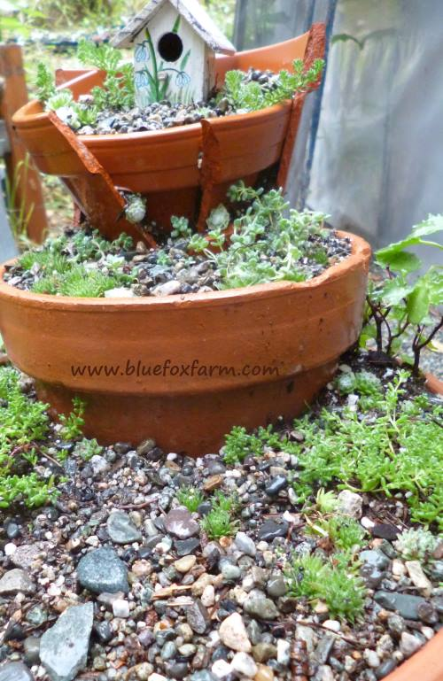 Don't throw those broken pots away! Click here to see how  Jacki of Drought Smart Plants made a fair garden from hers!