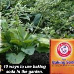 Using Baking soda in the garden *click it !