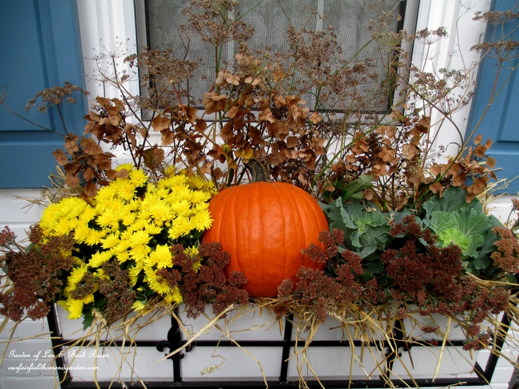 Fall windowbox with pumpkin, ornamental kale and dried sedum heads, dried flowers and seed pods from the garden.