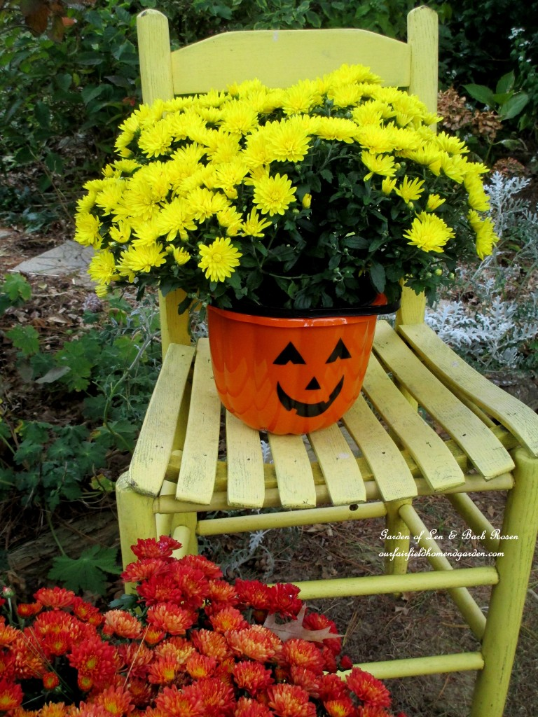 Halloween candy bucket used as a mum planter. https://ourfairfieldhomeandgarden.com/fall-decorating-at-our-fairfield-home-and-garden/