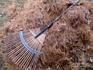 raking is great exercise! http://ourfairfieldhomeandgarden.com/diy-tucking-the-garden-in-for-the-winter-at-our-fairfield-home-garden/
