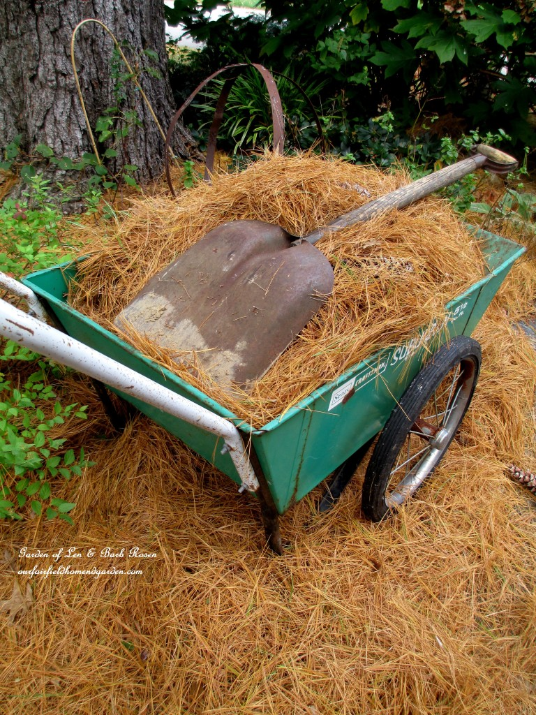 pine straw makes excellent mulch http://ourfairfieldhomeandgarden.com/diy-tucking-the-garden-in-for-the-winter-at-our-fairfield-home-garden/