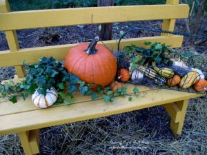 Fall gourds and hay in the cleaned front garden http://ourfairfieldhomeandgarden.com/diy-tucking-the-garden-in-for-the-winter-at-our-fairfield-home-garden/