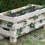 Strawberry Pallet Plante * click it !