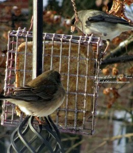 suet feeder  http://ourfairfieldhomeandgarden.com/its-time-to-feed-the-birds/