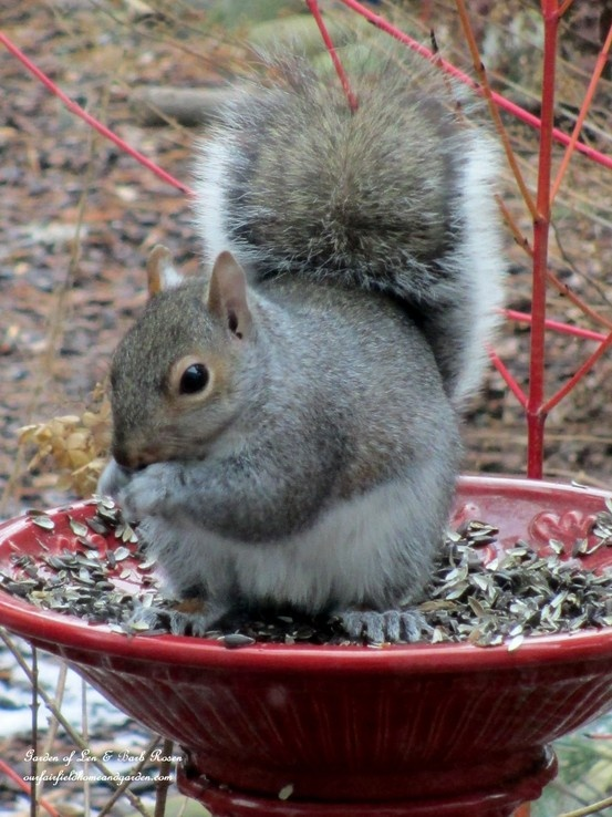 Squirrel at the feeder  http://ourfairfieldhomeandgarden.com/its-time-to-feed-the-birds/