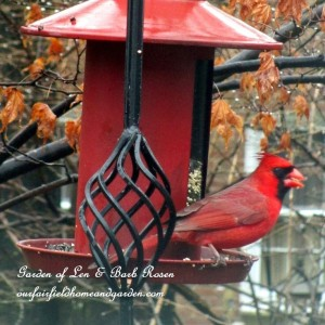 cardinal at the feeder  http://ourfairfieldhomeandgarden.com/its-time-to-feed-the-birds/
