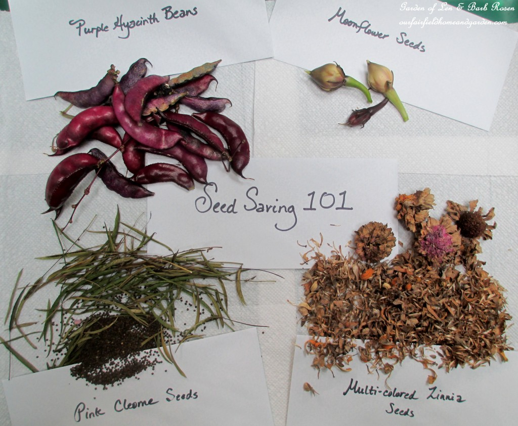 Seed Saving 101 ~ http://ourfairfieldhomeandgarden.com/diy-seed-saving-101/