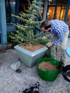 Winter Containers http://ourfairfieldhomeandgarden.com/diy-winter-containers-workshop/