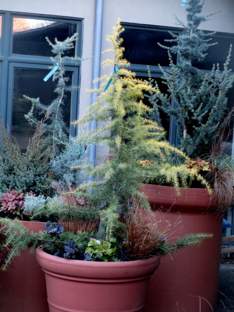 Winter Containers https://ourfairfieldhomeandgarden.com/diy-winter-containers-workshop/