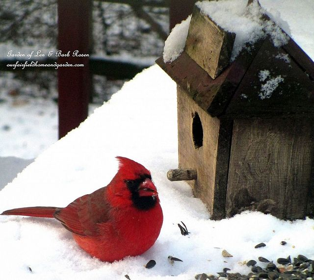cardinal in the snow  https://ourfairfieldhomeandgarden.com/its-time-to-feed-the-birds/