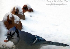 Blue Jay having supper https://ourfairfieldhomeandgarden.com/its-time-to-feed-the-birds/