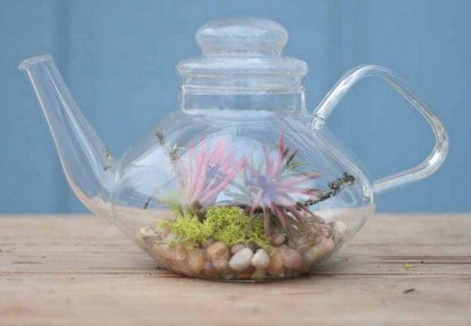 Teapot Terrarium http://gardentherapy.ca/tag/terrarium/