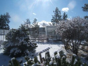 Plants for Winter Gardens http://sensiblegardening.com/plants-for-winter-gardens-2/
