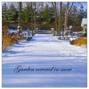 Garden in snow http://ahealthylifeforme.com/2012/12/04/december-gardening-to-do-list/