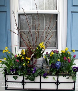 Spring Window Box http://ourfairfieldhomeandgarden.com/diy-project-welcome-spring-time-to-change-the-window-boxes/