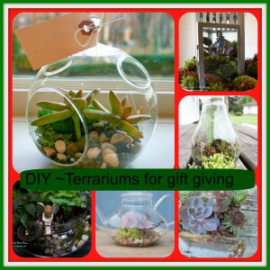 Terrariums http://www.pinterest.com/pin/155585362100670354/
