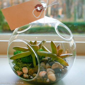 Terrarium http://ahealthylifeforme.com/2012/12/06/how-to-make-a-terrarium/