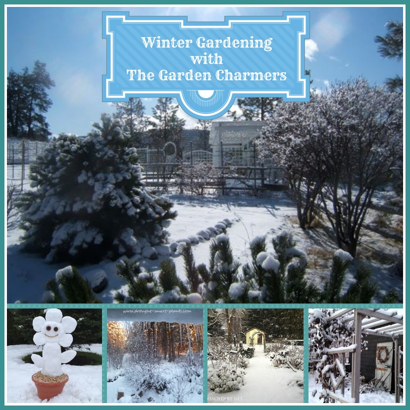 winter gardening https://ourfairfieldhomeandgarden.com/winter-gardening-with-the-garden-charmers/