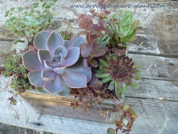 Terrariumhttp://www.drought-smart-plants.com/succulents-in-a-glass-fish-tank.html#axzz2mkYXgmwW