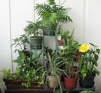 Winter gardening with the garden charmers our fairfield for Indoor gardening during winter