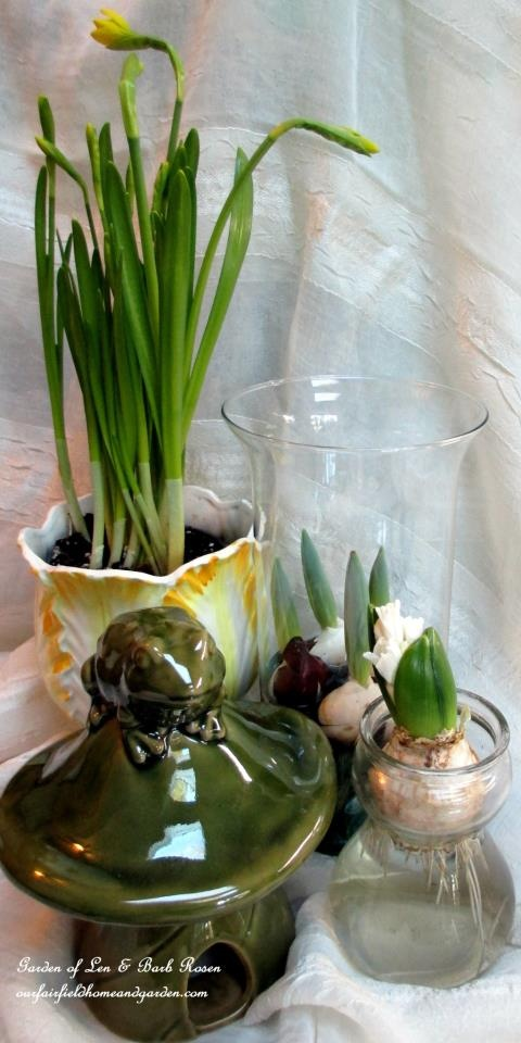 winter bulbs http://ourfairfieldhomeandgarden.com/indoor-gardening-winter-beauty/