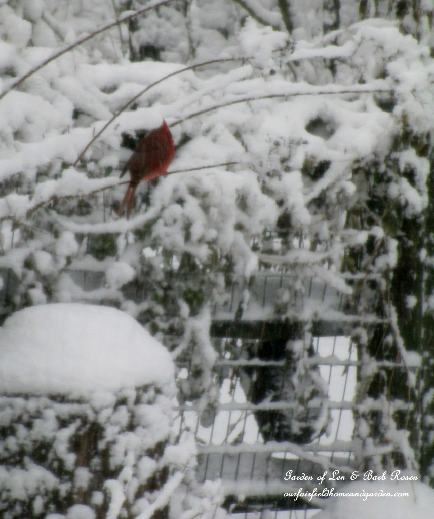 Cardinal in the snow https://ourfairfieldhomeandgarden.com/winter-birds-our-fairfield-home-garden/