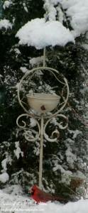 Cardinal at the feeder