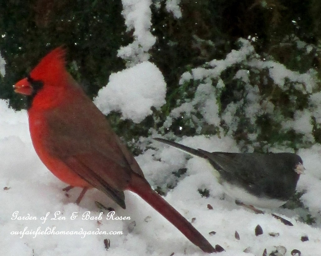 Male Cardinal & Junco http://ourfairfieldhomeandgarden.com/winter-birds-our-fairfield-home-garden/