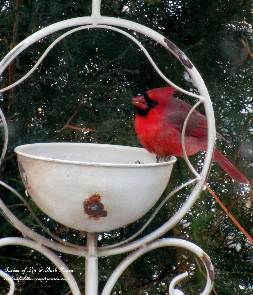winter cardinal https://ourfairfieldhomeandgarden.com/winter-birds-our-fairfield-home-garden/