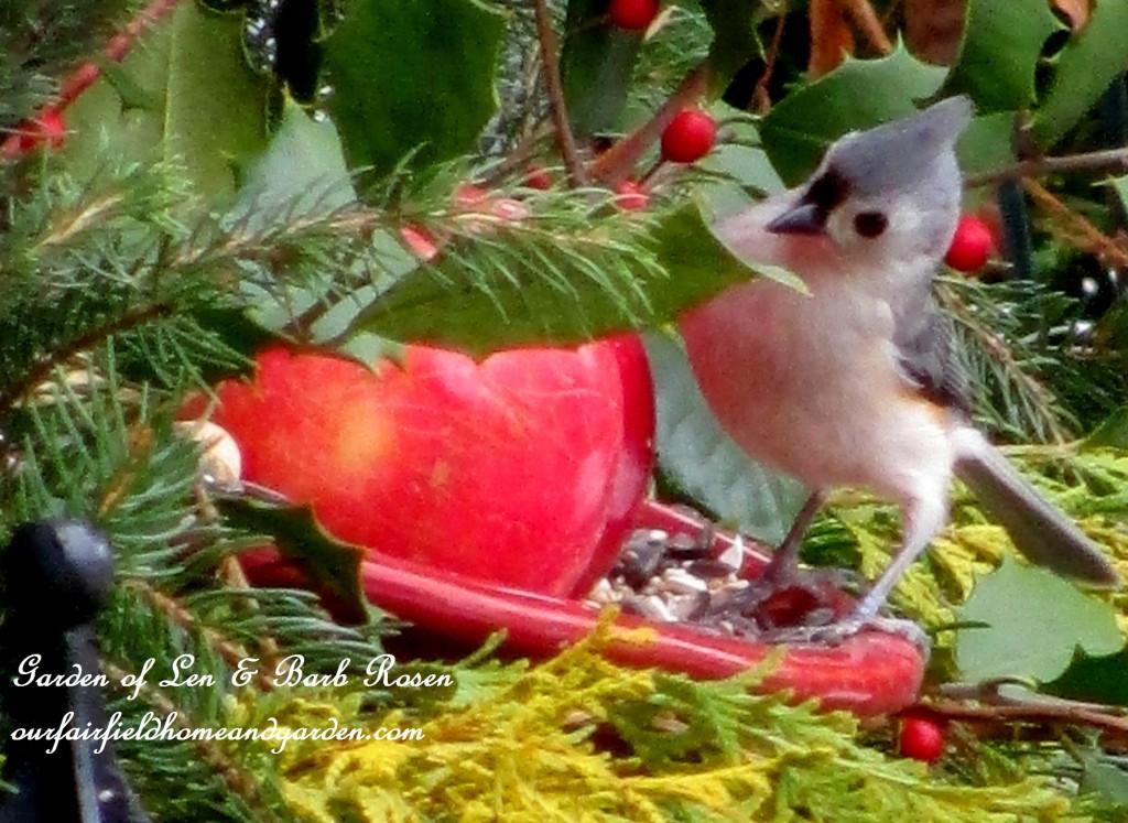 Tufted Titmouse having breakfast http://ourfairfieldhomeandgarden.com/winter-birds-our-fairfield-home-garden/