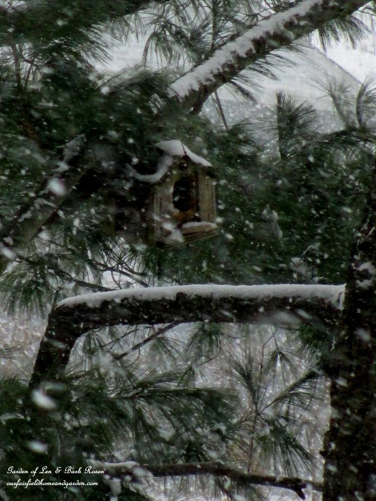 birdhouse in the snow http://ourfairfieldhomeandgarden.com/winter-birds-our-fairfield-home-garden/