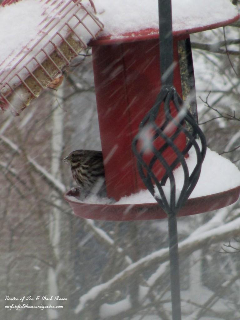birdfeeder during a snow http://ourfairfieldhomeandgarden.com/winter-birds-our-fairfield-home-garden/