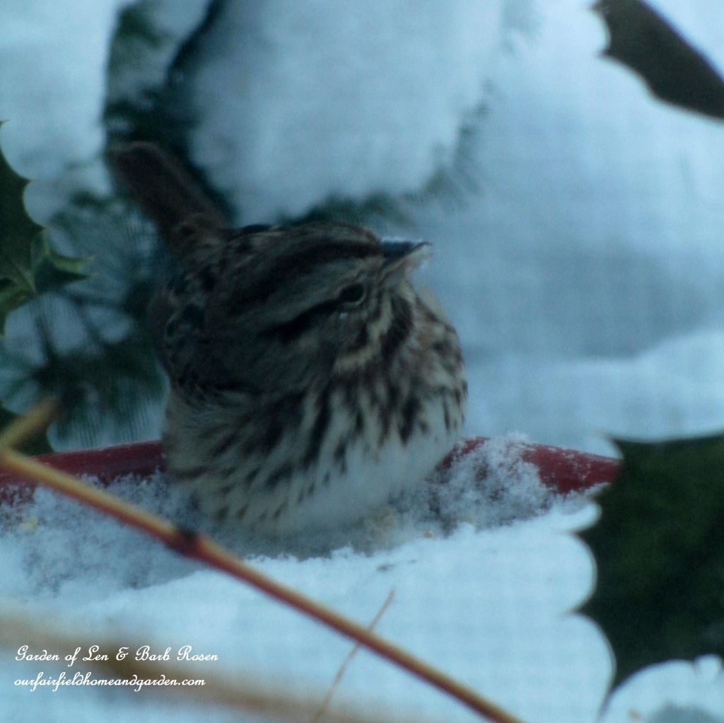 snowy dinner https://ourfairfieldhomeandgarden.com/winter-birds-our-fairfield-home-garden/
